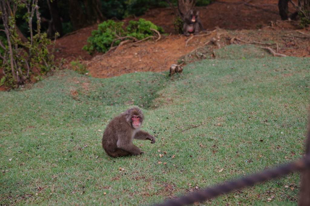 Monkey at Arashiyama Monkey Park | Family on Standby