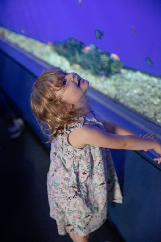 Osaka Aquarium | Osaka with Kids | Family on Standby
