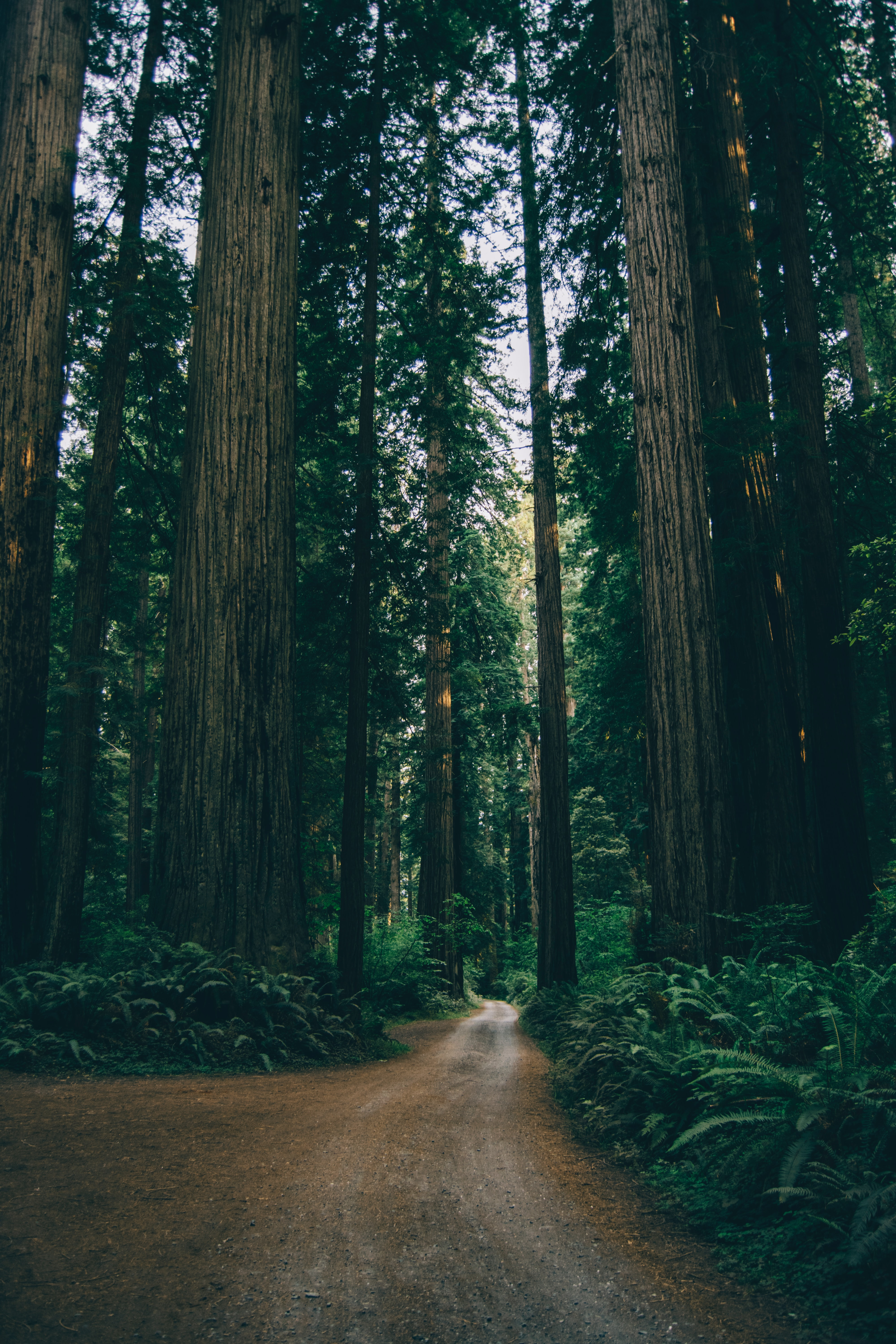 A view of the Redwood Forest | Best family rv trips