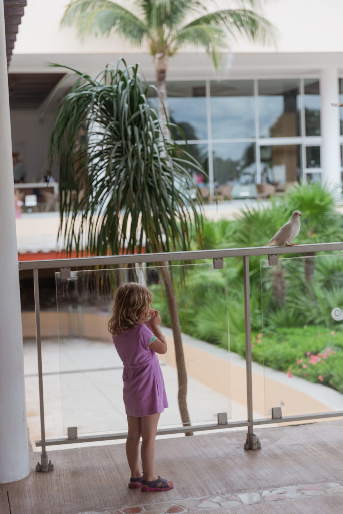 3 year old watching at bird at the Now Jade Resort in Puerto Morelos Mexico