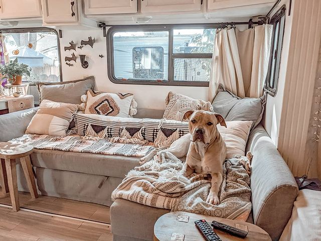 Dog lays on cozy blankets in renovated 5th wheel